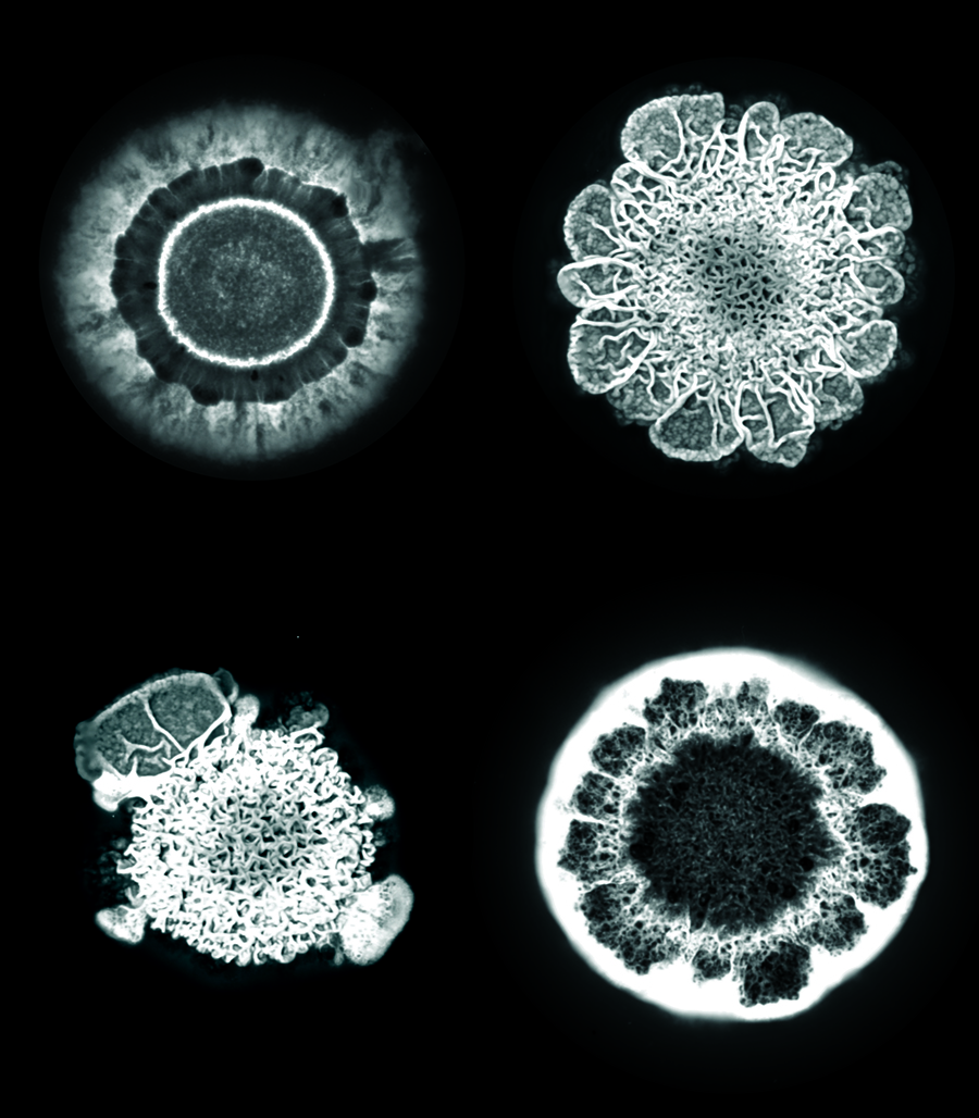 image of bacteria colonies